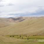 mongolia_lato_2004_24_wm