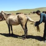 mongolia_lato_2004_2_wm