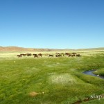 mongolia_lato_2004_33_wm